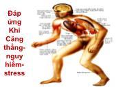 Y khoa y dược - Đáp ứng khi căng thẳng nguy hiểm - stress