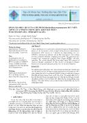 Đánh giá hiệu quả của chế phẩm Burkholderia Vietnamiensis BV3 trên giống lúa OM6976 trong điều kiện đất phèn ở huyện Hòn Đất, tỉnh Kiên Giang - Phạm Thị Thủy